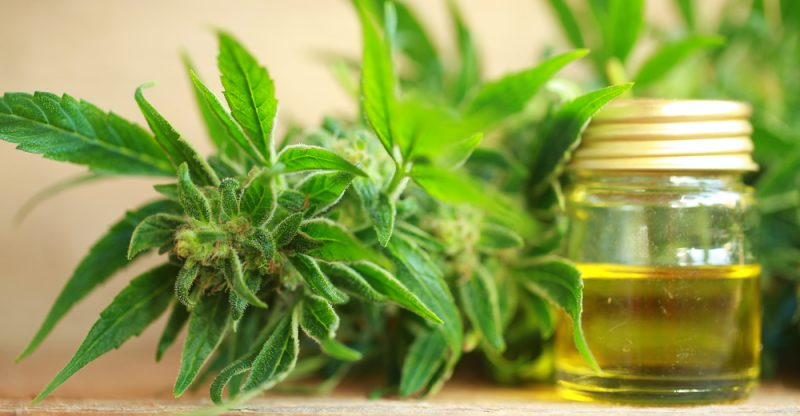 CBD Oil: Uses, Risks and Health Benefits